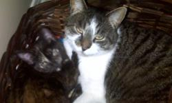 *Pending pick up* Geronimo!! This cat acts more like a dog then a cat. The poor guy is looking for a new home due to the passing of his owner. This cat is very friendly, loves to snuggle with his people, kitty and dog friends. Loves kids so much! He is