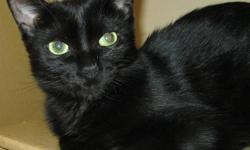 AVA will be paying for the veterinary care with a few minor restrictions to be discussed.   Cats with Feline Leukemia can live a very long time.  I know of one that was diagnosed 8 years ago in addition to lungs that had had chemical burns.  She is still