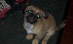 I have an 9 month old Pekinese and Chiuaua Mix. She is a small dog. Has  been around children and other pets such as a cat and dog. She is very cuddley. When she is rehomed she will come with a medium size crate (farely big), collar and leash, food bowls,