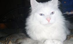 Can someone please help out Jasper. He is a white long haired cat, not sure of the breed, about 3 years old, very affectionate at times, we are forced to give him up because of lack of money, he is in need of some grooming, his hair is all matted and cant