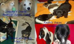 These puppies are at the Hinton & District SPCA.  Adoption price includes spay/neuter, vaccinations and vet check.