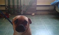 HELLO I HAVE A PUG AND JACKRUSSEL SHE IS 10 MONTHS OLD HAS A LOT OF ENGERY  NEED SOMEONE THAT CAN GIVE HER A LOT OF TIME  LOVES TO PLAY SHE IS AFFECTIONATE SHE IS STILL A PUPPY  VERY CUTE   I CAN NOT KEEP HER ANYMORE DUE TO MY HEALTH  SHE IS JUST A LITTLE