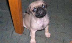 We Have 1 male left adorable and healthy  $400.00 you vet check