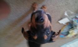 Hey i have a lab/rottie mix for sell.she is a great dog but im moving to a place that doesnt accept pets. she is a loving and caring dog. she loves cuddling. she isnt trained yet but she is getting better. She includes food and dishes and treats and