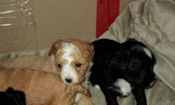 There are two dogs that have had puppies approximately a week apart, the mothers and their babies are in need of loving homes.  These dogs are a part of a rescue effort; both mothers require a special home, with lots of love.  They have both been good