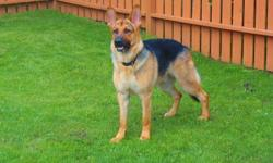 Parker needs a new home. He is a pure bred male unaltered German shephard. He is a big beautiful boy but sadly we do not have the time to give him that he deserves. He has been raised with small children and small dogs. He is house broken and enjoys being