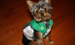 bently is a male pure bred teacup yorkie. he is 9 months old, and has all his vaccines, he weighs approximately 4 lbs.  bently has been pee pad trained.  bently has been raised with three children, so he is very gentle and not aggressive in any way!