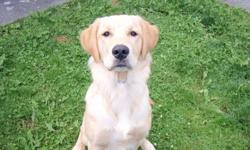I have a male Purebred Golden Retriever who is 10 months old.  He is fully house trained, neutered , up to date will all shots.  He is very loving and great with kids.  Hard to have to find him a new home but family situation has changed.  VERY important