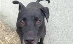 Shelter: BC SPCA - Victoria Animal ID: 407515 Birthdate: July 04, 2011 - Adult Spayed/Neutered: Yes Male This 5 year old boy still thinks he's two! Bouncy happy-go-lucky Rex requires an active home ready and willing to sign up for training classes with a