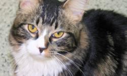 """Please visit www.safeteam.ca under our """"adopt"""" page to view all of them!! Contact us to meet them. The cats seen here in the pictures are just a few of the beautiful kitties who are currently looking for loving forever homes! All kitties come FVRCP, FELV"""