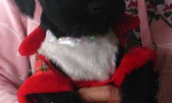 I have two goregous little scottish terrier puppies one male and one female. They have been vet checked first shots dewormed and are ready for there new homes. 705-286-0812