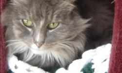 Breed: Domestic Long Hair   Age: Senior   Sex: F   Size: M Primary Color: Grey Tabby Secondary Color: White Age: 10yrs 8mths 1wks Animal has been Spayed   View this pet on Petfinder.com Contact: BC SPCA Cowichan & District Branch | Duncan, BC
