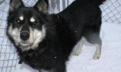 Breed: Husky   Age: Senior   Sex: M   Size: L Hi my name is Barnaby. I am about 11 years old and I am looking for someone to love me and give me a forever home. I have lived outside my whole life. I am neutered. Adopters outside of the NWT will be