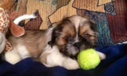 We 2 female Pure breed Shih Tzu puppies (born Oct 17th, 2011).  They are unbelievably adorable and needs a good home and family that will take great care of them.   We have made sure that these puppies have been greatly loved and well taken care of. This