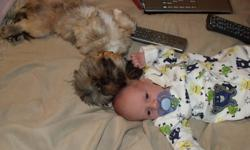 I have a 4 year old Shih Tzu-Yorkie mix for sale.  He is very friendly and excellent around children.  We're asking $300.00 FIRM.  He also  comes with  a kennel/carrier, dog dishes, sweaters, leashes, etc...  Baby not included :)