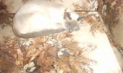 2 female  blue point Siamese cats  and 1 male chocolate snowshoe Siamese. 1 female is 1  years old, other is 2 1/2 and male is 2 years. Quiet and friendly, used to large and small dogs. Asking $150. or best offer for the three of them.