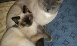 I have a few Siamese cats in desperate need of a new home.There is a 5yr old male Blue point.,1.5yr old Chocolate point female and a 8 month old Chocolate point female.They are all litter-trained,socialized with other pets and kids and are NOT