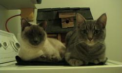 Siamese & Siamese Cross cats needing to find there forever home.  I recently had a baby and can no longer afford to keep them.  Both are female and are not spayed.  Mia is 4.5 and Misty is 3 yrs old.   I can deliver to Vernon on Oct.18 or possibly