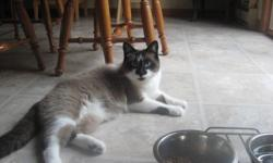 Mother (Siamese) & Son (Snowshoe-born '07) need a loving home.  Both cats fixed and have been indoor cats only.  Well-behaved, friendly cats, like to be part of the family.  Would not do well in a home with other cats/dogs. Do NOT want to seperate them.