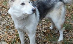 Name:  SOPHIE Breed:  HUSKY     Sex: FEMALE                 Age: APPROX .  2 YEARS OLD Adoption Fee:  75.00 Licence Fee:  50.00 Within City of Kamloops - $25.00 for remainder of year Description:  SOPHIE is a medium size dog.  She is at the City of