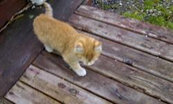 A stray cat had 3 kittens, I cannot take them in as I have dog that doesn't like cats, so would like to find home for winter for mother cat and 3 kittens, you can take them separately.  May not be able to take for 2 more weeks not sure how old they really