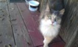 I am looking for a home for 2 homeless cats that I have been feeding in my yard. I would like to find them a home before the weather turns bad.   KITTY #1 is a very handsome male tabby approximately 1-2 years old.  We call him Jude. He is very friendly &