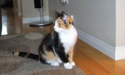 This sweet little girl is Skyla. Sky has had a rough start to life with very minimal human contact. She has recently come into our rescue in hopes we can socialize her and find her a perfect home. Skyla has proven to us that all she needed was a little