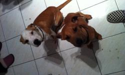 Very sweet brother and sister pups rescued from a high kill shelter in California. We are an independent rescue organization called Big and Small Rescue who pull dogs form high kill shelters in California and transport them up to Canada for a better