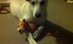 Rescue for Life It's pretty Penny here! I am a 6 month old puppy who was adopted 2 month ago and is now being returned because I might get too big for their family. I am still quite small and should only be about 45 pounds when fully grown. I am a
