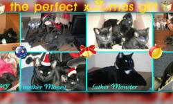 We have 6 beautiful kittens(5 boys and 1 girl) to a good homes They are  trained, eating dry and vet food, not shoots,very playfull, friendly,smart (you can see mother and father-they are the best and healthy cats in the world).You are gonna love them