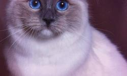 Now accepting deposits to be placed on the waiting list Deposit of $250.00 CAD ensures that you get your pick. Pick of babies comes on a 1st deposit down, 1st pick basis. TICA reg'd Ragdolls Champion Mother Champion Lines Champion Potential Kittens are