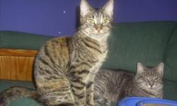 Gorgeous Tiger Striped Cats & Kittens! Fixed & Vaccinated.   Check out our gorgeous tabby cats & kittens ready to adopt this weekend!!   These beautiful cats & kittens have been raised in family foster homes, these kittens are lovable, sweet and perfect