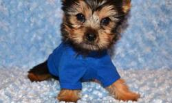 Male Tiny Toy Yorkie $950 All our puppies have been vet checked, De-wormed and received their 1st shots. Sizes range from 4 to 5 pounds when fully mature. Call us to book a viewing or for any questions 647-896-9466 No emails or texts please :))