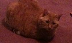 Would anyone be interested in peaches? He is an 8 year old male tabby orange cat, he is neutered and declawed, likes going outside in a fences yard on on a rope, he likes to keep to himself and doesn't like much attention. We have to get rid of him for