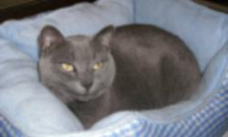 4 year old female indoor cat. Spayed and needled. With covered litter box, bed, food and toys. Must be a home with no dogs or children as cat is very timid.