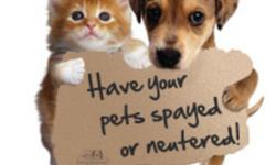 Kamloops is in the middle of a cat over population crisis so why are so many people allowing their cats to have kittens?!?!?  These kittens often go to people who don't spay and neuter and then there are even more kittens!  Every kitten you carelessly add