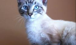 I have two free kittens I rescued from the streets that are looking for a good home. I would love to see them go together as they are brothers and adore each other. They would come with Their litter box, toys and food. They are just over 12 weeks This ad