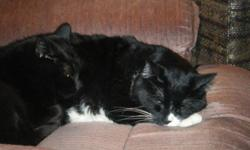Good Morning!!! I am moving out on my own January 1, 2012 and I urgently need a loving new home for my two cats. Here is a little about them: Bamby: I am 6 years old, and black with 3 white hairs on my chest. I love to sleep. I like dogs and currently