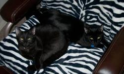 I currently have had to make a tough decision to find a better home for my two female cats, even though as much as i don`t want to part with them i feel it would be selfish of me to keep them when i can`t provide the attention and affection that they are