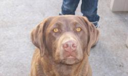 Roxy is a very loving dog she is well mannered and loves attention. She is all up to date on her shots and is also kennel trained and house trained. She loves to run and play, an active family would be great for roxy. She is also great with kids as i have