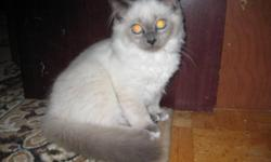 Cutte, cuddly and very affectionate kitten is for sale. For more info call Nadejda at 516-450-6754