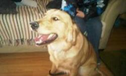 I have a 1 year old Pure Bread Golden Retreiver for adoption. He is extremely friendly, loves other dogs, loves children, loves people, extremely playfull, house broken, and knows how to sit and shake a paw. He is up to date with his shots, and also has