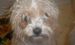 Two Yorkie-Poo's very lovable excellent with children and other animals good family dogs. $300.00 for both
