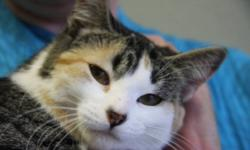 Breed: Calico   Age: Young   Sex: F   Size: M Brooke is an adorable, affectionate little one year old girl who had her cushy comfy life upended when she was abandoned by her people and had to fend for herself for months. Since being brought to the Humane