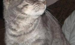 Breed: Domestic Short Hair Tabby - Grey   Age: Young   Sex: F   Size: M Little Lady was rescued from a municipal pound. She is spayed, vaccinated and microchipped. She is a gentle little girl who really suits her name. She would love her own home soon.