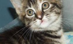 Breed: Domestic Short Hair   Age: Young   Sex: F   Size: M Marley and her littermates were born to a stray cat, in a garage. They arrived at the shelter the next day, and then went to a foster home for 8 weeks, where they grew up strong and healthy.