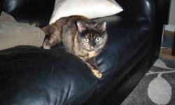 Breed: Tortoiseshell   Age: Young   Sex: F   Size: M Meadow is a super sweet & very lucky little girl. She was found as a stray in someone's backyard and no owners were found. Meadow is missing one of her back legs - it looks as it was surgically removed.
