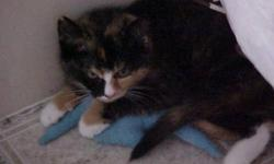 Breed: Tortoiseshell   Age: Young   Sex: F   Size: M A special person is needed for this special kitten! Sophie is a sweet girl who was born with a congenital malformation that affects her ability to jump. Her mother was so severely malnourished that
