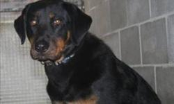 Breed: Rottweiler German Shepherd Dog   Age: Young   Sex: F   Size: M Primary Color: Black Secondary Color: Tan Age: 1yrs 5mths 3wks Animal has been Spayed   View this pet on Petfinder.com Contact: BC SPCA Cowichan & District Branch | Duncan, BC
