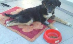 Breed: Collie   Age: Young   Sex: M   Size: S Philip was found on November 28 laying at the side of a road. Further investigation revealed he had broken vertabrae in his back and is paralyzed. Probably hit by a car. He was in relatively good condition